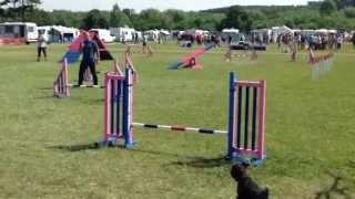 Derby Dog Training Club July 2013 - Agility Grade 5 To 7