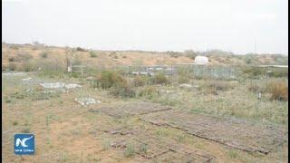Smart technologies turn desert in China's Ningxia greener