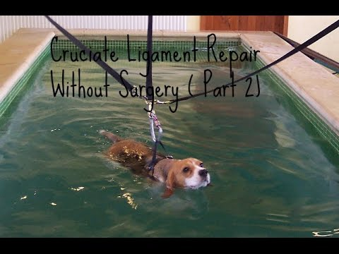 Dog Cruciate Ligament: Treating Without Surgery [Part 2]