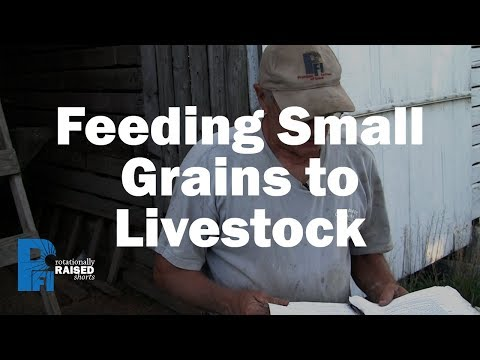 Small Grains, Large Gains: Feeding Oats to Pigs - Practical