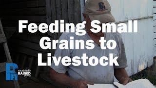 Feeding Small Grains to Livestock