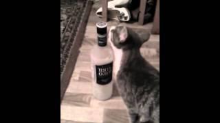 Котик добрался до бутылки