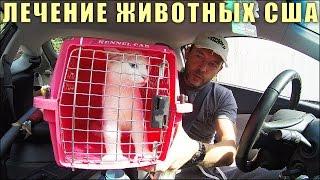 Кот Заболел   Лечение Домашних Животных в США (Cat Sore Lip Treatment Pet Hospital)
