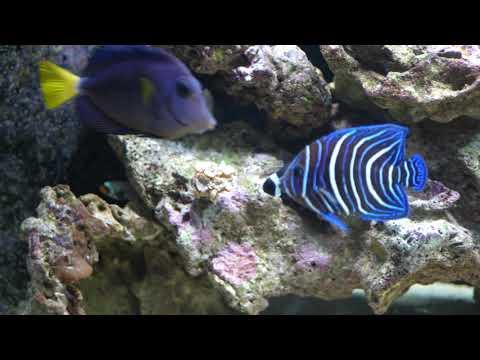 panasonic gh5 video: panasonic 25mm f1.7 prime lens: 75 gallon saltwater aquarium