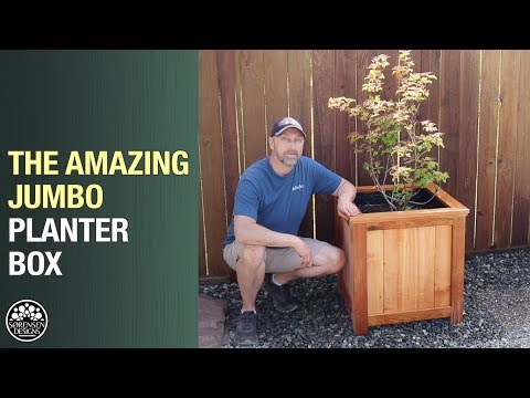 The Amazing Jumbo Planter Box for Trees & Shrubs