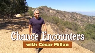 Chance Encounters with Cesar Millan: Obessed with Objects