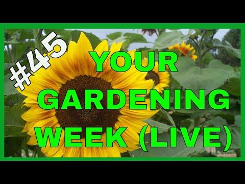 Gardening in Winter (Q&A)