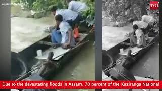 Kaziranga submerged in flood waters, desperate animals look for shelter in human habitats