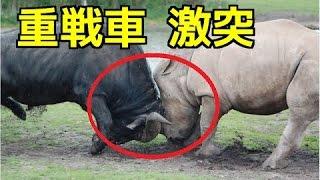 【衝撃映像】①サイVSバッファロー 重戦車対決!②ヒョウの捕食 ヤマアラ...