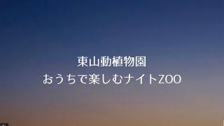 【東山動植物園公式】おうちで楽しむナイトZOO