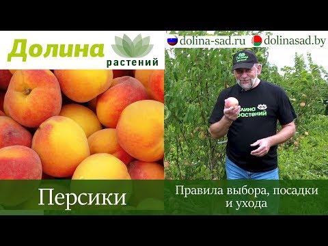 Морозоустойчивые САЖЕНЦЫ ПЕРСИКОВ И АБРИКОСОВ для климата России и Беларуси