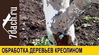 Креолин: обработка плодовых деревьев от вредителей - 7 дач
