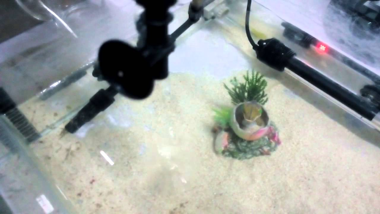Boyu aquarium fish tank external filter canister ef 05 - How To Use Boyu Ef 05