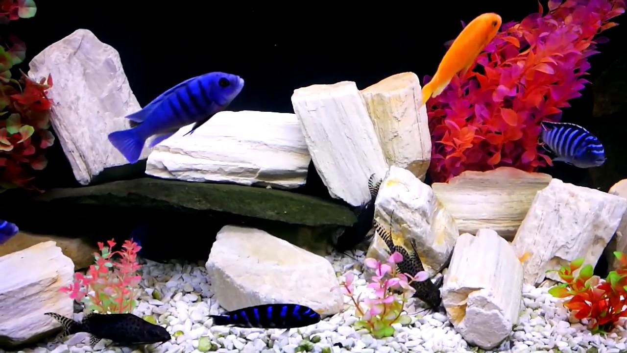 Цихлиды и синодонтисы в аквариуме с камнями 3