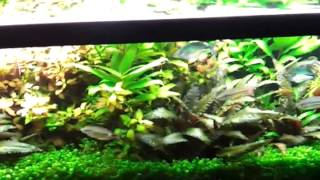 Planted Fish Tank. Aquariums Made Easy When Youre Out Of Town