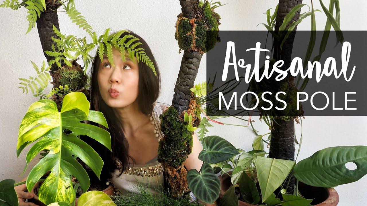 DIY Artistic & Natural Moss Pole your plants deserve: FULL TUTORIAL