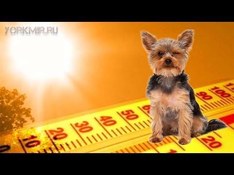 Температура у собак | Подробная инструкция.