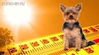 Температура у собак | Докладна інструкція.