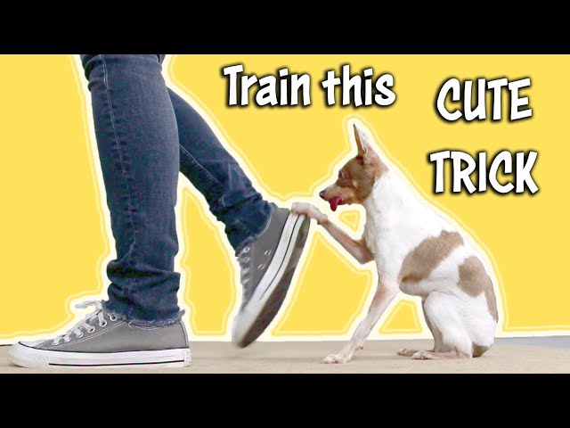 Canine Freestyle Footwork Trick! - Dog Tricks by Kikopup