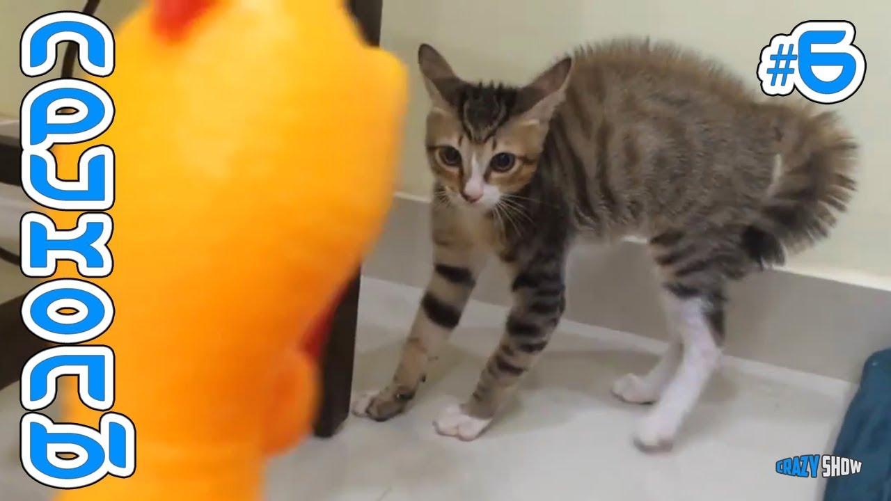 Веселые Смешные Кошки с Лучшими Кошками 6 Животные и | приколы с животными смотреть 2019