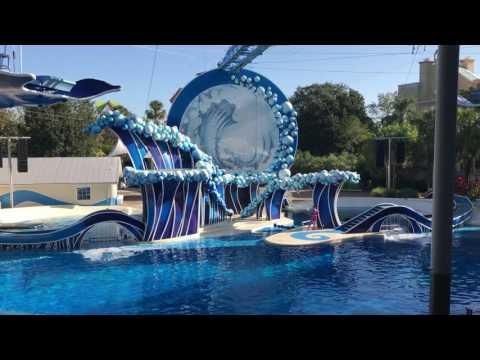 Blue Horizons - Pilot Whales
