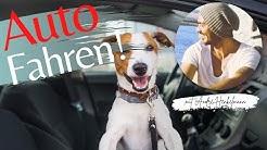 3 Profi-Tipps, um deinen Hund an das Autofahren zu gewöhnen!