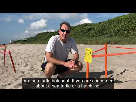 Sea Turtle Nesting Informational Video