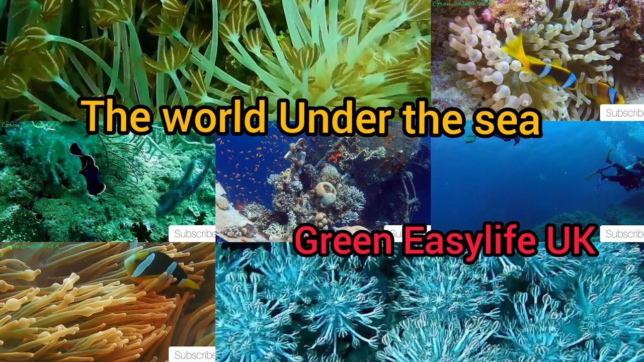 Ocean Life world under the sea underwater marine life wonders of nature 2020 P#1 Relaxing ASMR
