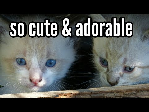 So Cute, Adorable & Fluffy Kittens