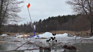 Оставили жерлицы без присмотра вернулись а там сработка Зимняя рыбалка