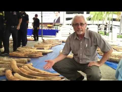 Tom Milliken reporting from Thailand on 3 tonne ivory seizure