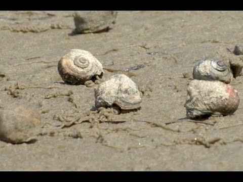 Mudflat Biodiversity