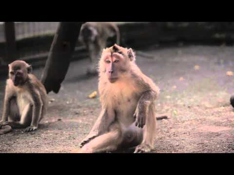 JAAN:  THE TRUTH BEHIND THE MASKED MONKEYS