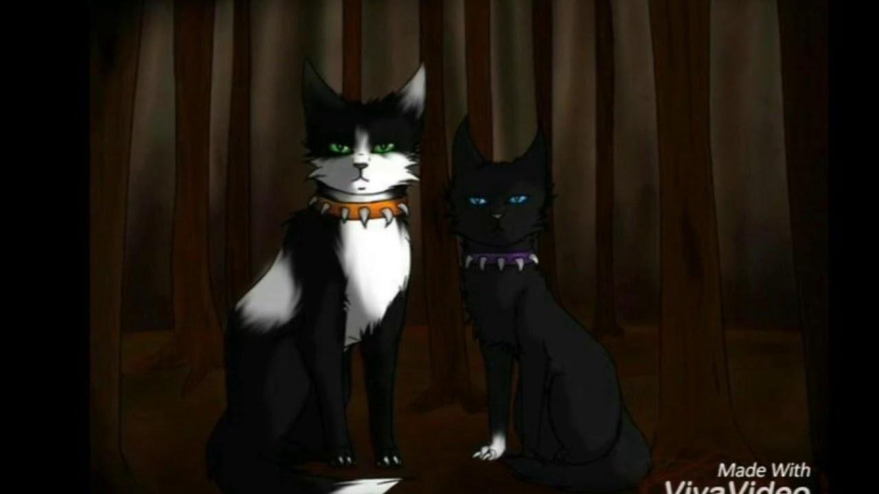 Коты воители коты кровавого племени картинки
