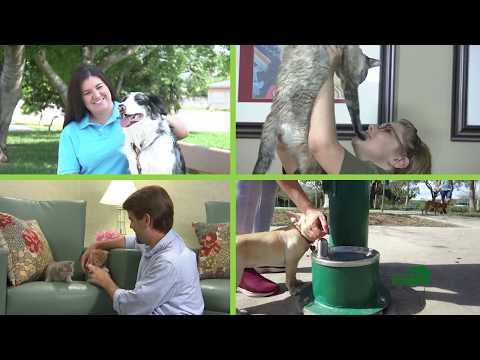 Miami-Dade County - Wildlife Rabies Vaccination Effort