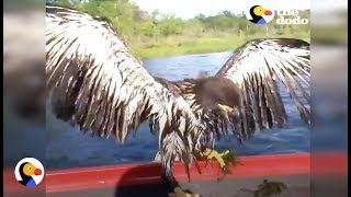 Drowning Baby Eagle Rescued by Awesome Guys | The Dodo
