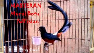 Download Mp3 Murai Batu Full Isian Cililin Tengkek Lovebird Dll