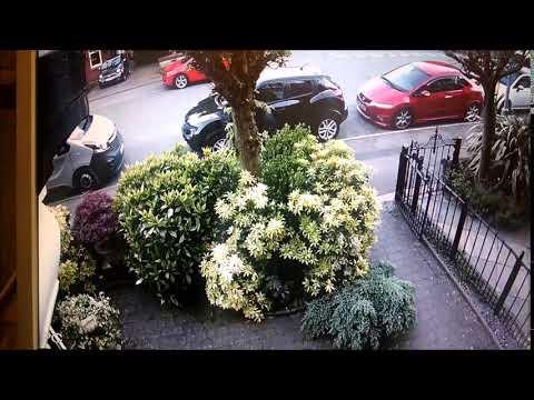 Curzon Street Front Garden