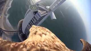 Águila volando sobre Dubai y Burj Al Arab,  Sony Action Cam