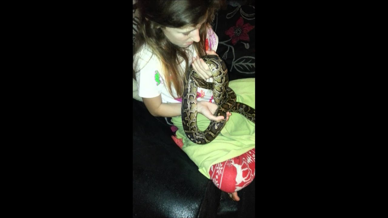 Think, Burmese python with nude girl something