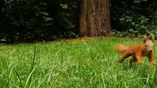 出奇 大自然 林 動物 慢慢地 視頻 音樂 春天