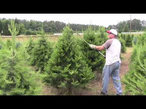 Pruning Christmas trees with Rotary Knife