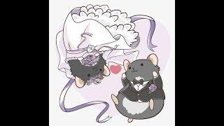 Cưới vợ cho Hamster (Bé Gấu) ngày 26/2/2019