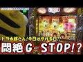 【アップティービー 】アニマル梯団『アニマルアドベンチャー♯19』(ミリオンゴッド神々の凱旋)京楽会館 米野