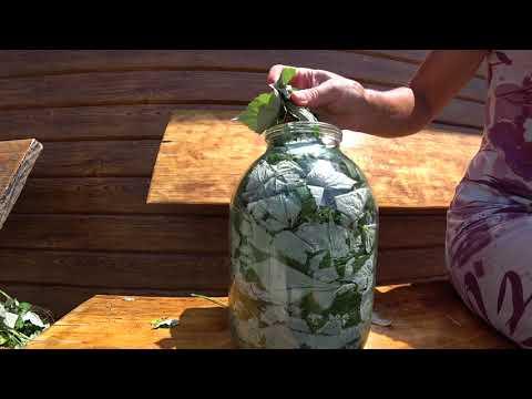 Чай из листьев малины. Простейший рецепт ферментации.