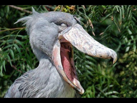20 Birds You Won't Believe Exist!
