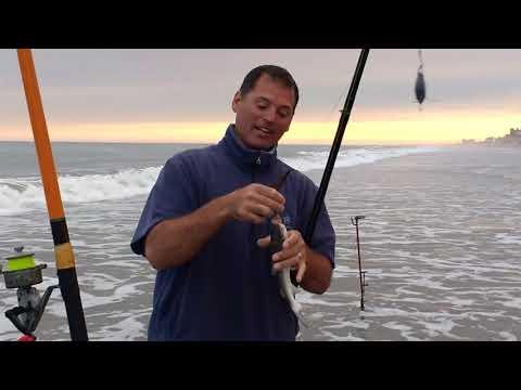 Pescando corvinas rubias