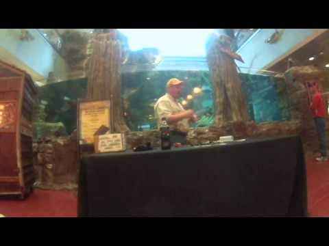 Tom Davis talks about top water lures at Bass Pro Shop in Cincinatti Ohio 3/8/2014