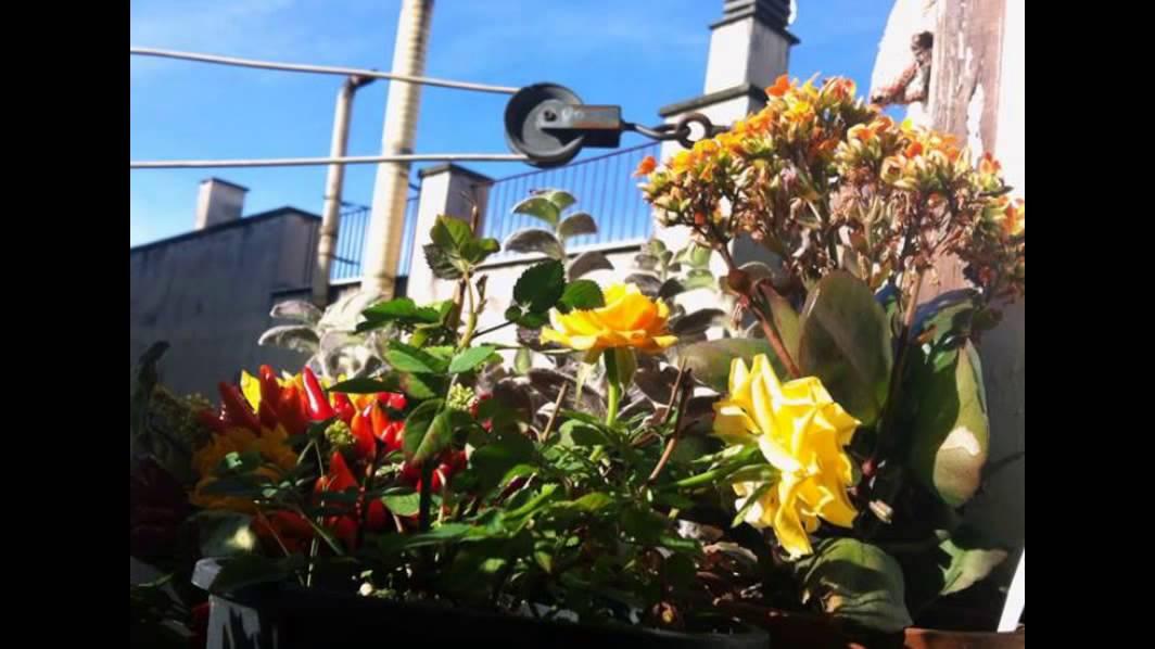 Balconi e terrazzi fioriti all 39 esquilino foto di b for Terrazzi fioriti