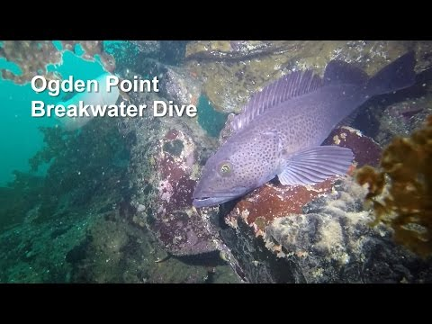 Scuba Dive - Ogden Point Breakwater, Victoria, BC - October 2016